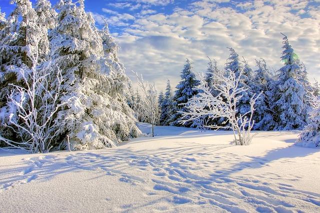 Snow Forrest